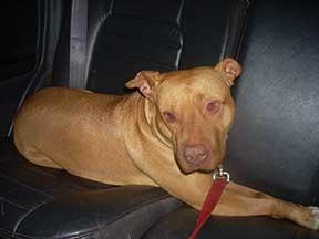 Hazel in car