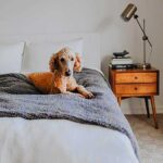 Dog sitting on a blanket