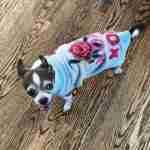 Marsanne Brands artistic streetwear pooch sweater