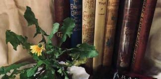 Photo of Wicca books and dandelions