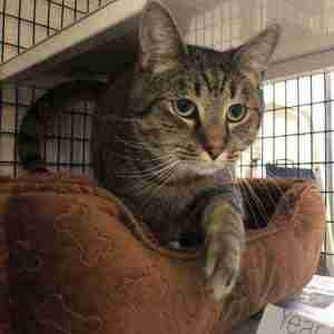 Meet Argo at the Cape May Animal Shelter