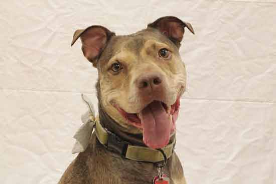 Barnabas is looking for a forever home