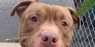 Meet Blue at Union Animal Shelter