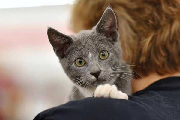 Meet Jasper the cat