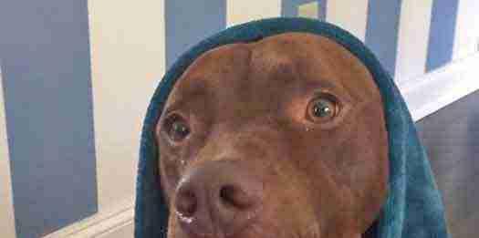 Meet Wonka at the Cape May Animal Shelter