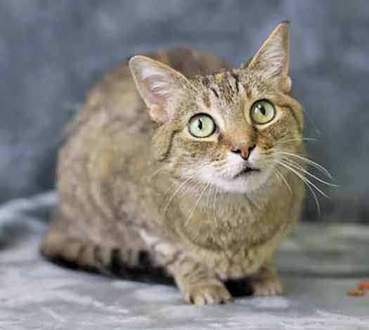 Sasha is a petite tortoise shell cat with mesmerizing green eyes