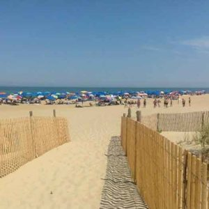 """Rehoboth_Beach, Del. at """"Poodle Beach. Photo by Michael Cook."""