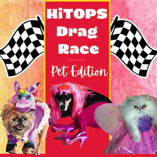 HiTOPS: Drag Race: Pet Edition flyer with pets in drag